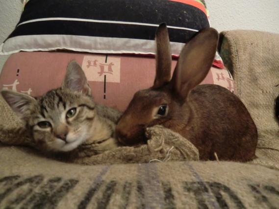 Lyra et Gauvain