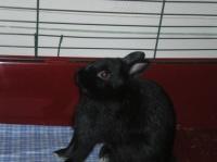 Percy s'étire, c'est dur la vie de lapin !