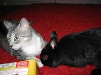 Percy et Chanel
