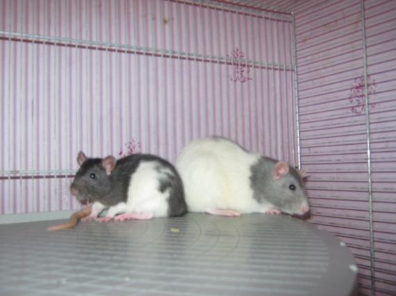 De gauche à droite : Granie, Myrtille
