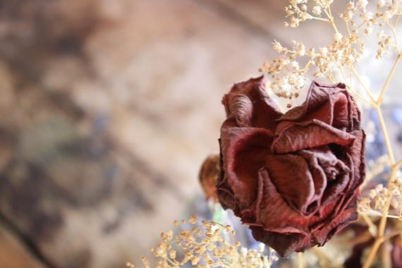 fleur séchée