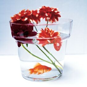 boutin-richard-poisson-rouge-2203185