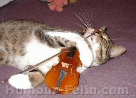 big_1286-chat-musicien