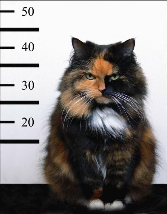 chat-voleur