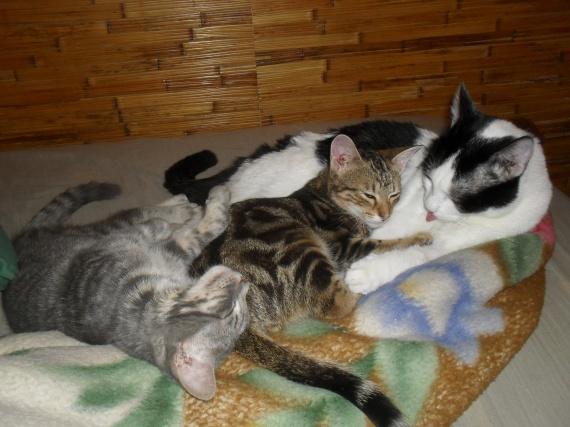 Kiki, Nala, Choupy