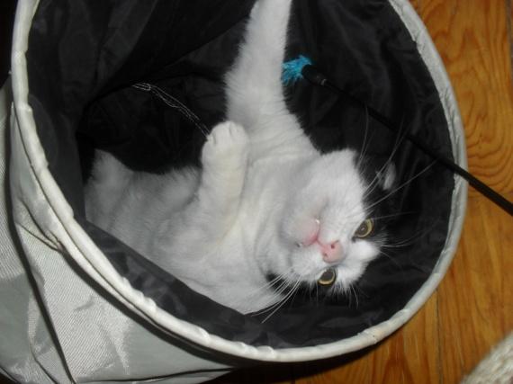 kiki dans le tunnel