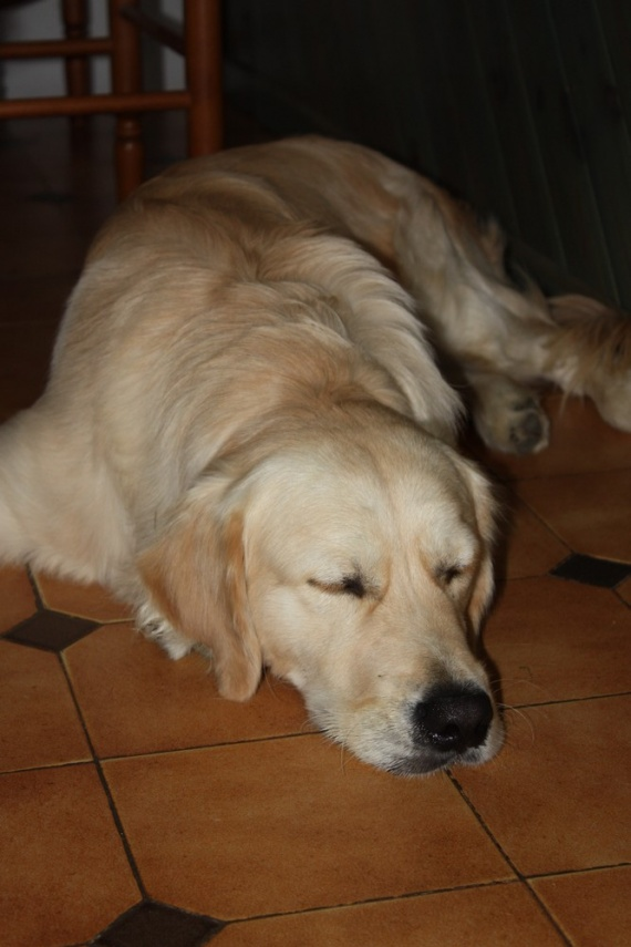 loulous-golden-aussie-img_3771-img