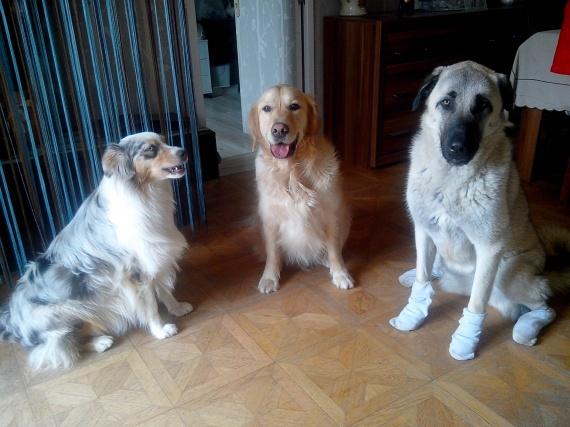 Tess, Eliott & Gina