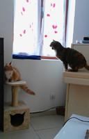 Lettie & Dina