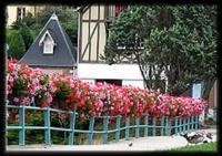 fleurs-fin-bassin-port