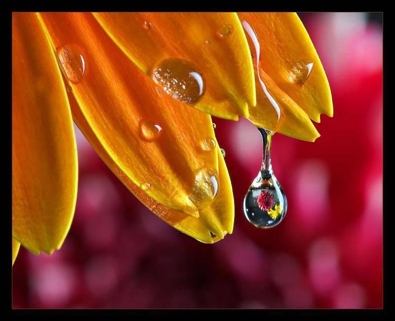 rosee perlee douce