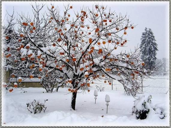 vague-de-froid-hiver-2008-2009-thomas-29-11-2008_clip_image002
