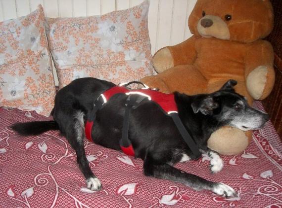 mon chien est mort ludi je suis ann antie m decine v t rinaire forum animaux. Black Bedroom Furniture Sets. Home Design Ideas