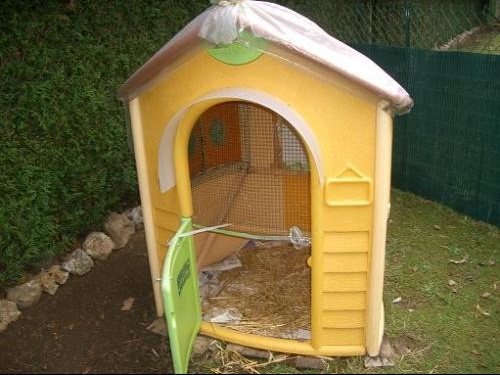 comment lever des poules forum libre animaux forum animaux. Black Bedroom Furniture Sets. Home Design Ideas