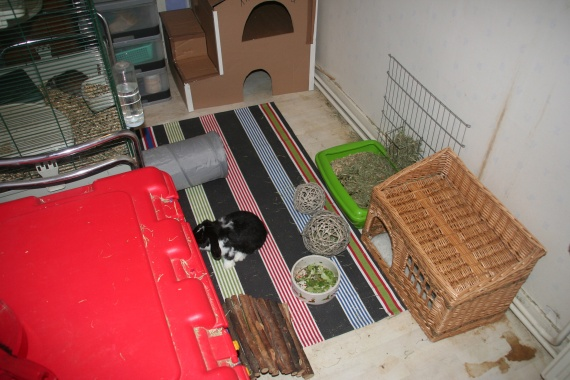 le lapin au balcon page 2 hamsters cochons d 39 inde lapins forum animaux. Black Bedroom Furniture Sets. Home Design Ideas