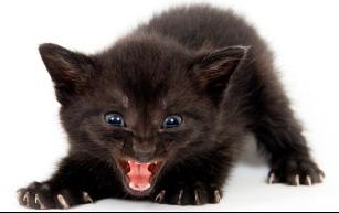 chaton-diabolique