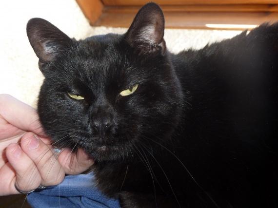Salem tronche en biais