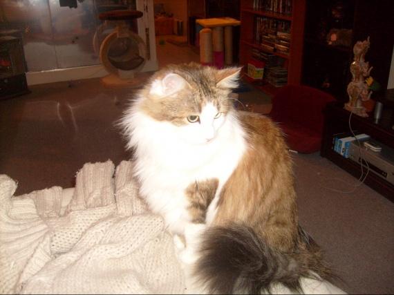 missgranger 13 decembre 2009 003
