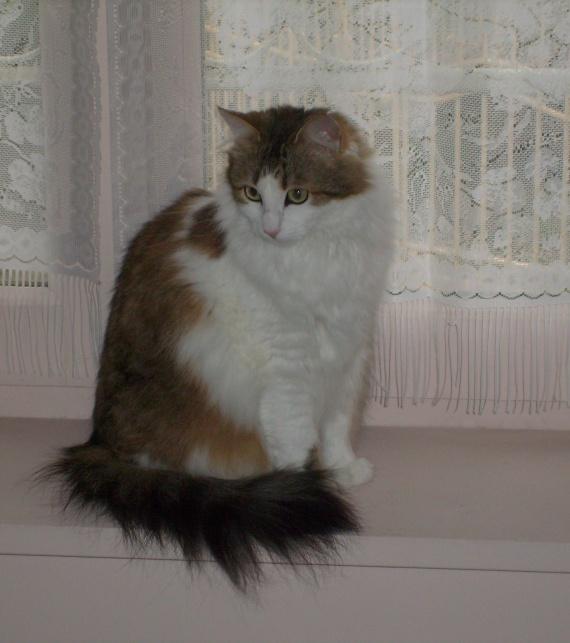 Miss Granger Fevrier 2011 010