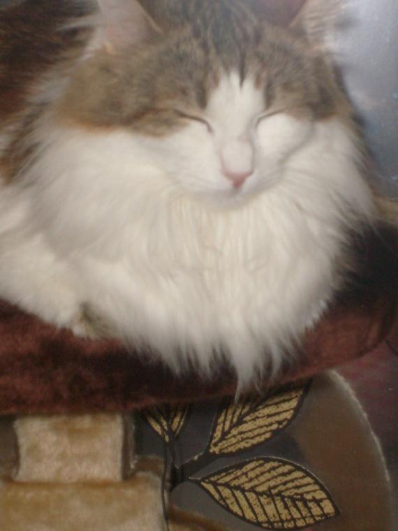 missgranger 13 decembre 2009 012
