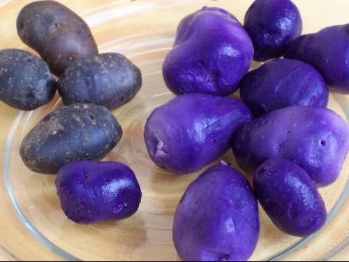Potatoes_Vitelotte