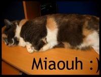 Mon chat =)