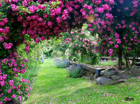 jardin rose docti brebie photos club doctissimo. Black Bedroom Furniture Sets. Home Design Ideas