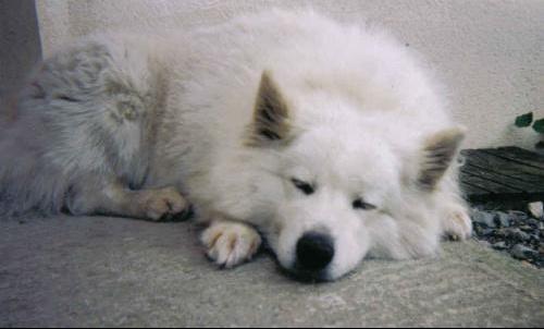 mon chien est mort hier soir m decine v t rinaire forum sant. Black Bedroom Furniture Sets. Home Design Ideas