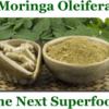moringa oleifera2019
