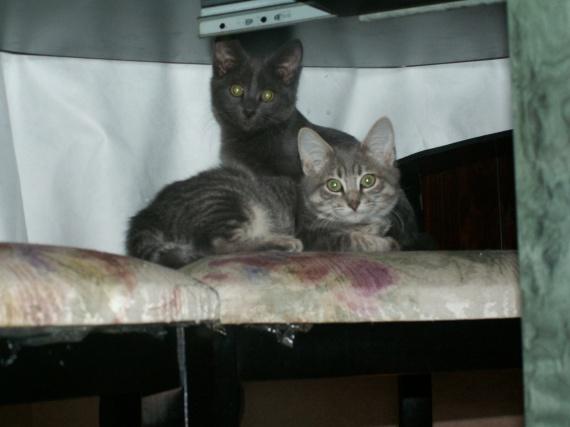 Mimine, nous, tatie soirée, bébé chatons, Calinoux etc 462