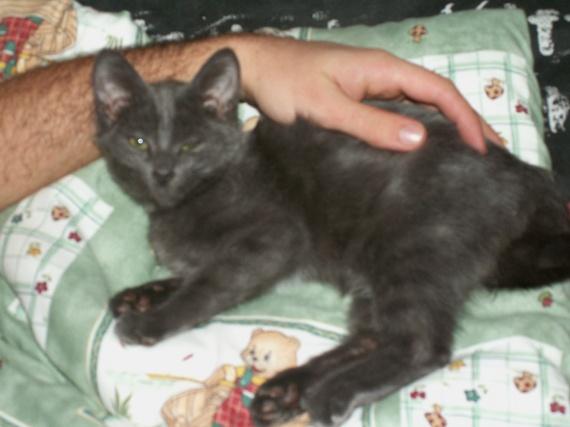 Mimine, nous, tatie soirée, bébé chatons, Calinoux etc 486