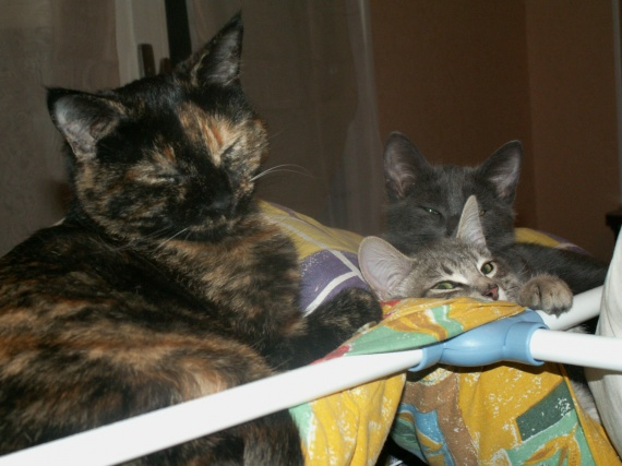 Mimine, nous, tatie soirée, bébé chatons, Calinoux etc 534