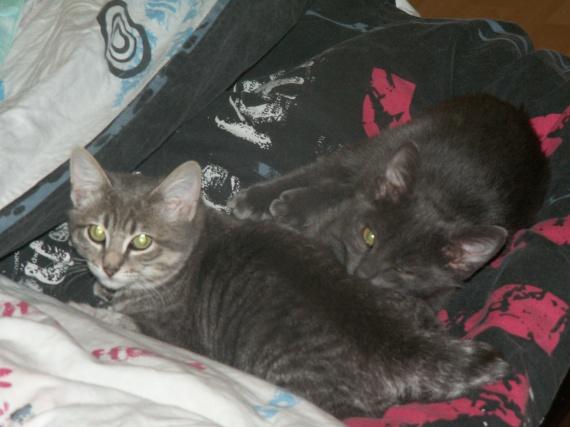 Mimine, nous, tatie soirée, bébé chatons, Calinoux etc 551