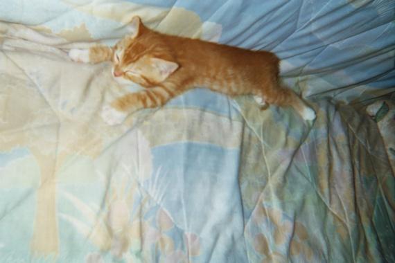 scoubi couché