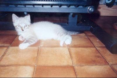 chaton prunelle couche