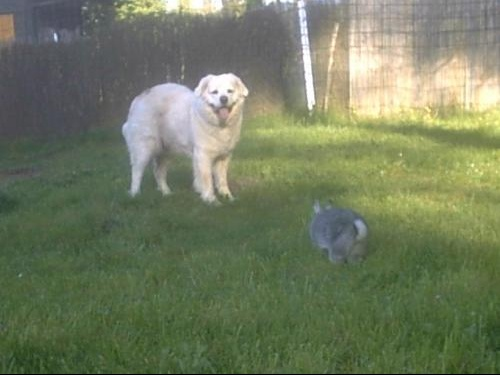 lapin et chien.JPG2.