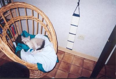 chaton chaise