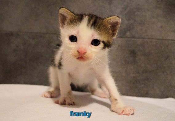 franky ou lynch