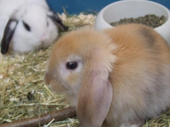 Photo d'un lapin ressemblant au mien