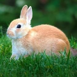 Photo d'un lapin ressemblant à mon autre lapin