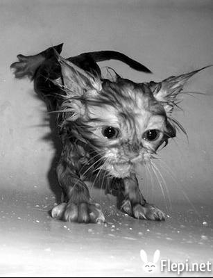 wetcat11