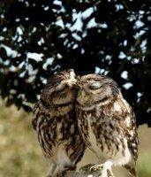 L'amour c'est trop chouette