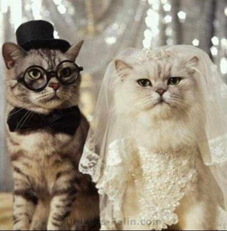 big_2247_mariage_chat