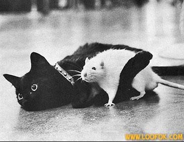 chat et rat