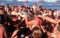648x415_capture-ecran-tweet-montrant-dauphin-photographie-touristes-argentins