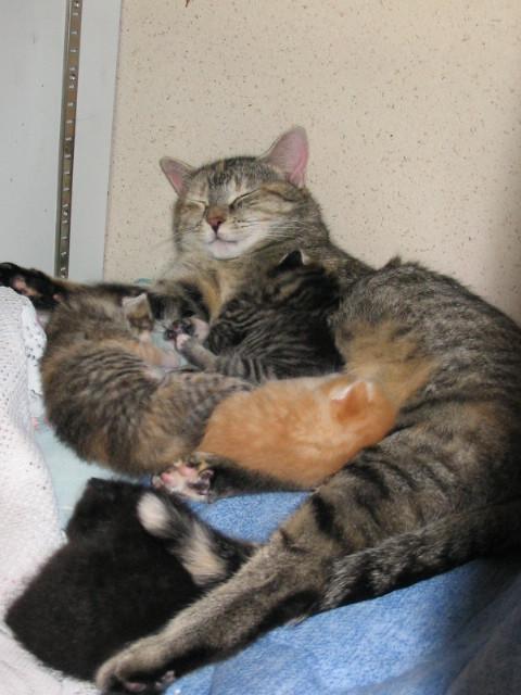 Fifille et ses enfants