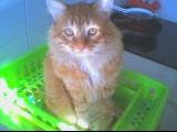 Chtim's petit lion