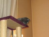 Les chats adorent être en hauteur...