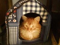 Chtim's dans sa maison de chat