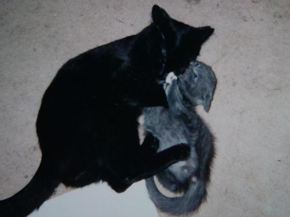 Frodon et son fils Merlin